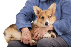 Best Lap Dogs For Seniors List