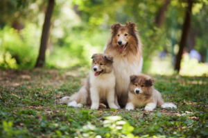 Big Fluffy Dog Breed List