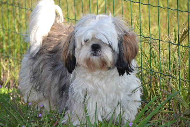 Long Haired Dogs 15 Medium Small Lovely Doggie