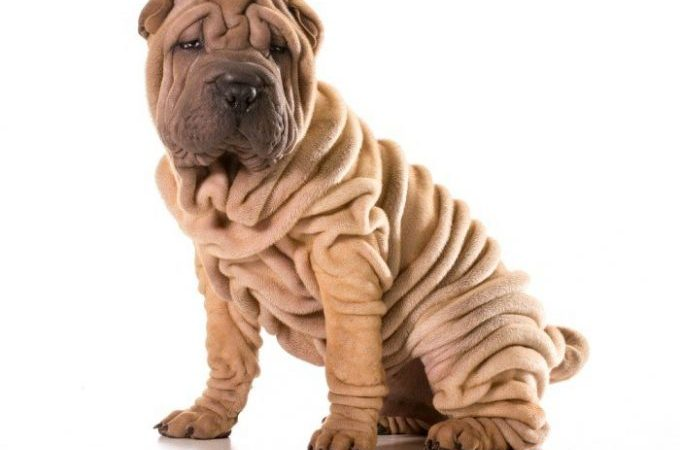 Wrinkly dogs list