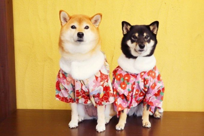 All japanese dog breeds list