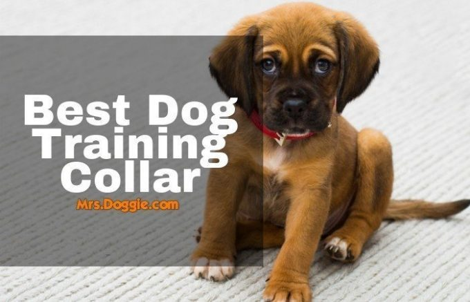 Remote Training Collars for dogs list