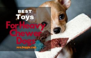 best toughest dog toys