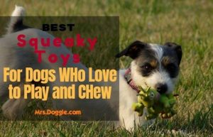 Squeaky Toys For Pets Guide