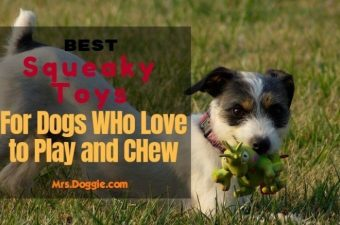 indestructible squeaky dog toys FOR AGRESSIVE CHEWER