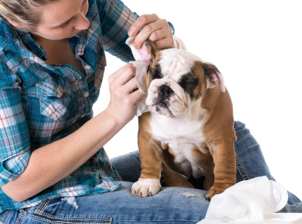 Dog Wipes for Pet Ears