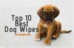 Top Rated Dog Wipes List