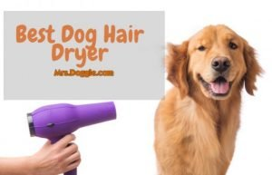 Blow Hair Dryer For Pets