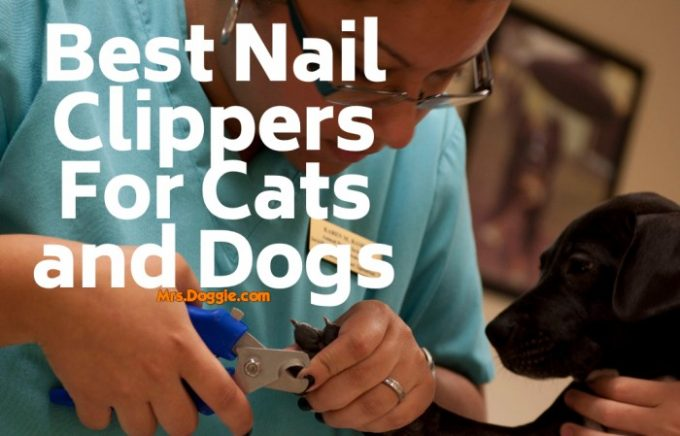 Nail Trimmers For Cats and Dogs