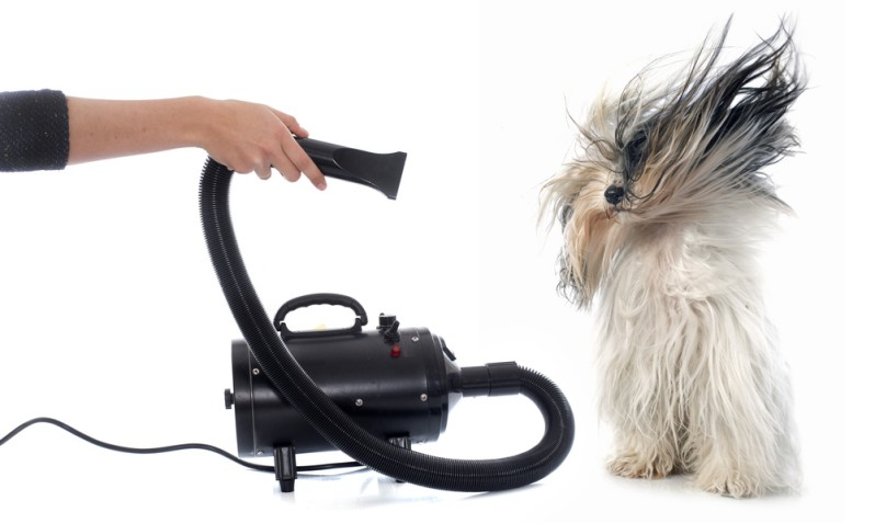 Dog blow dryer using for cute dog