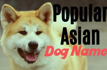 names for asian dogs