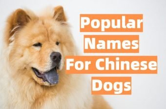 Popular Chinese Dog Names List