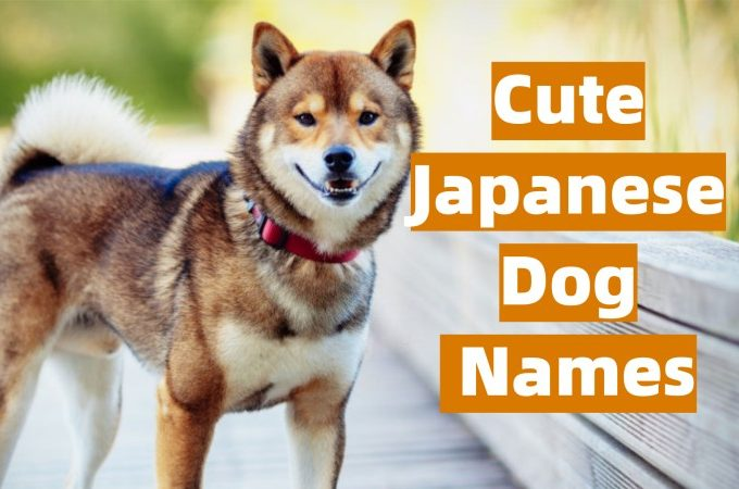 Japanese Dog Names and Meanings