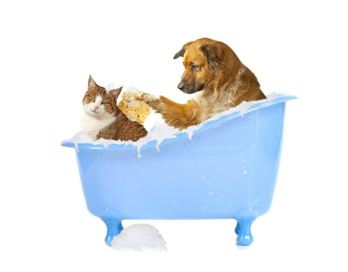 portable pet bath tub