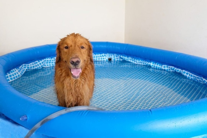 large portable dog pool