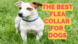 Dog Flea Collars Guide
