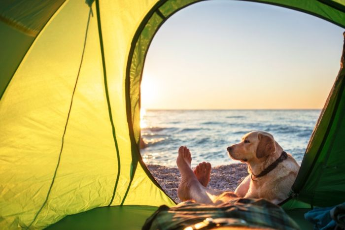Dog lays on owners feet while camping