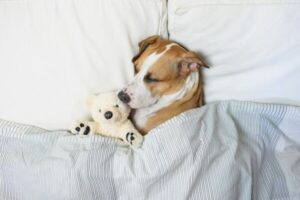 cute dog sleeping with a teddy bear