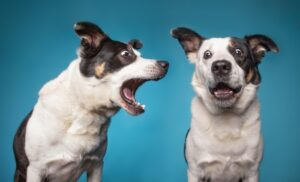 Dog barking for nothing guide