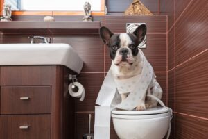 Dog in the bathroom guide